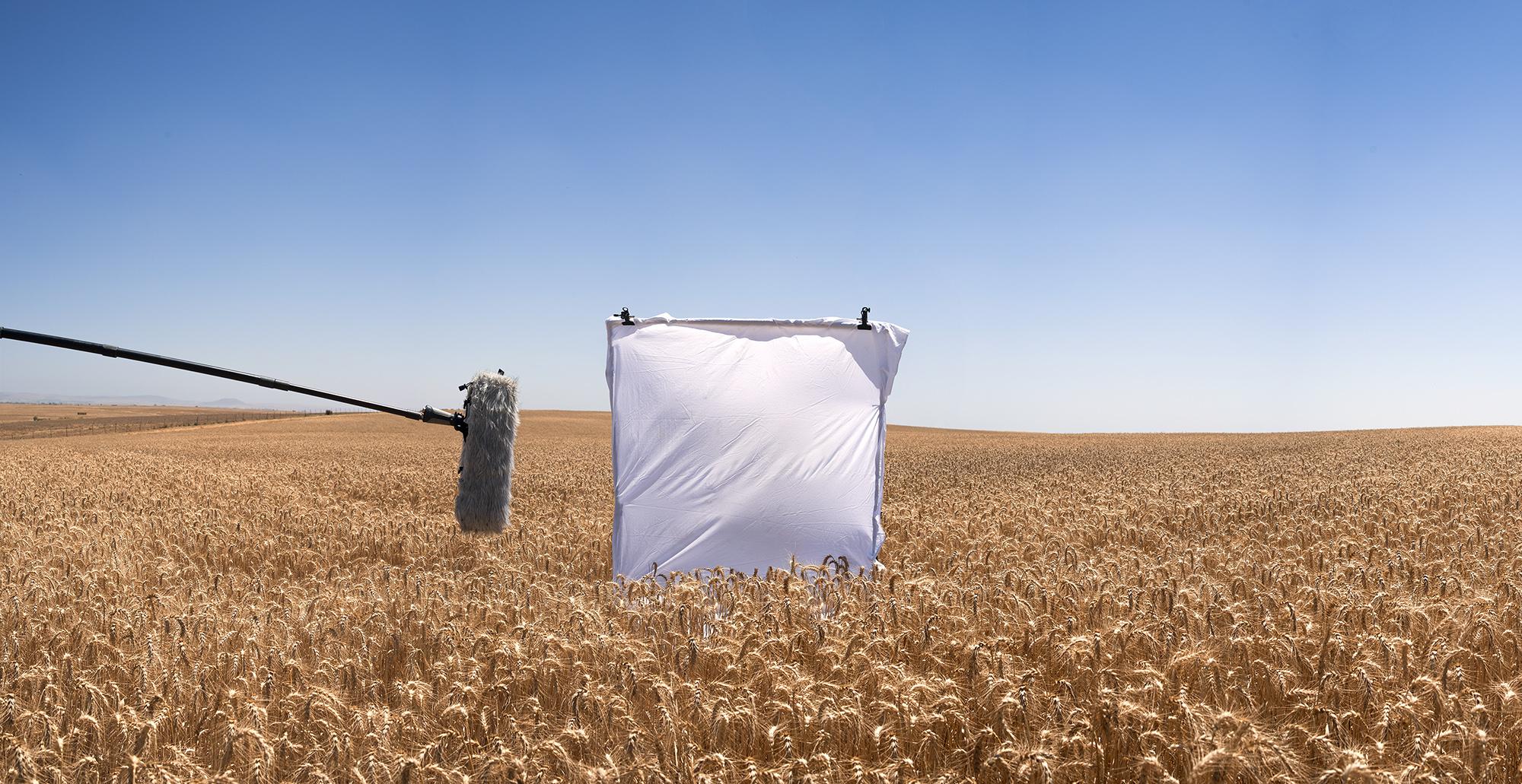 Wheat_Field_1.jpg