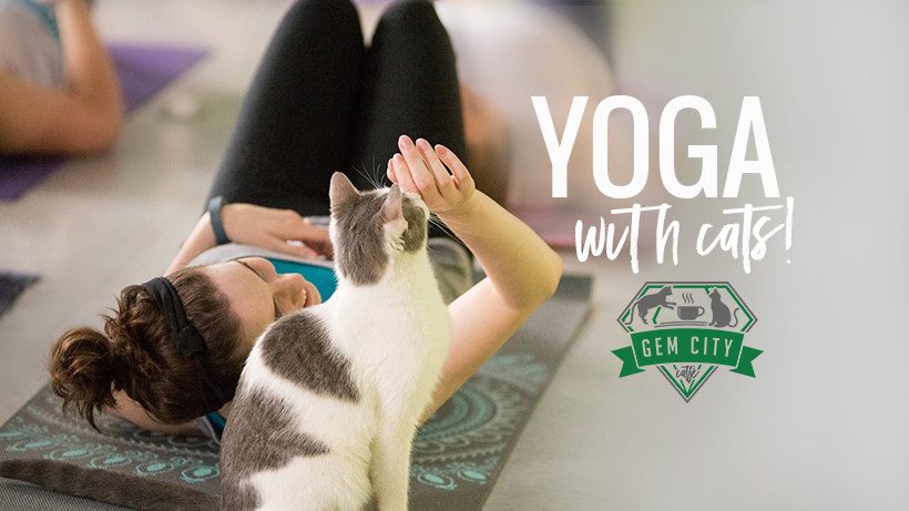 7_19_18_yogawithcats_cover.jpg