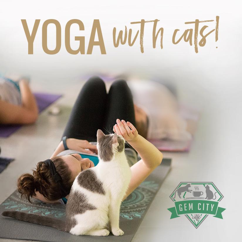 7_19_18_yogawithcats_square.jpg
