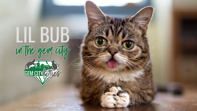 09sep18_coverphoto_lilbub.jpg