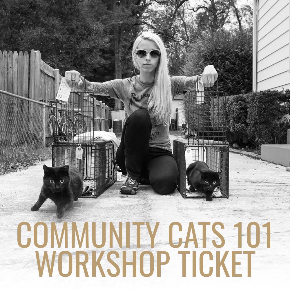 kittenlady_workshop_sq.jpg