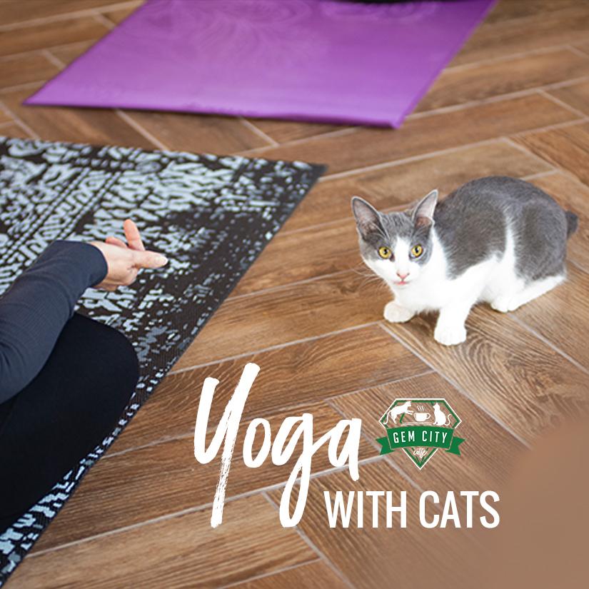11.18.18_yogawithcats_sq.jpg