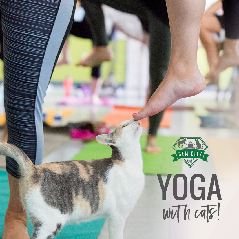 10_10_18_sq_yogawithcats.jpg