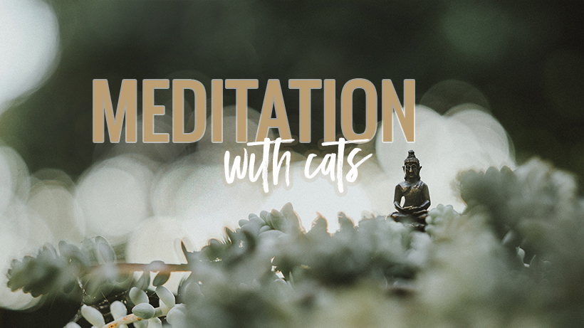 07_17_18_coverphoto_meditationwithcats.jpg