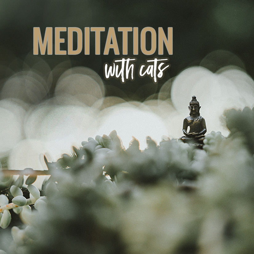 07_17_18_meditationwithcats_sq.jpg