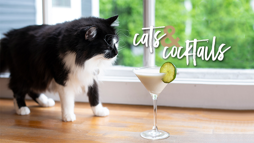 08.27.19_catscocktails_cover.jpg