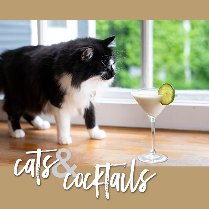 08.27.19_catscocktails_sq.jpg