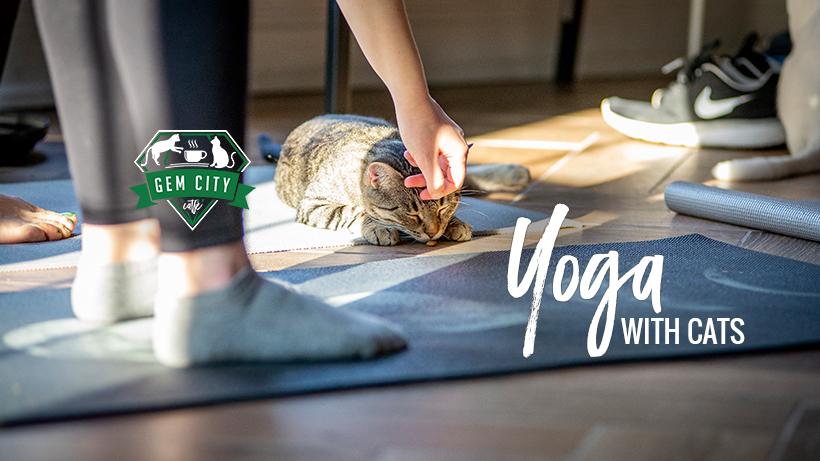 1.7.19_yogawithcats.jpg