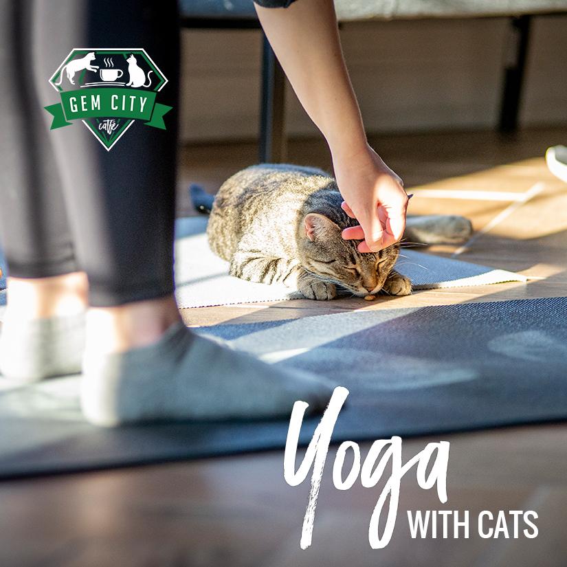 1.7.19_yogawithcats_sq.jpg