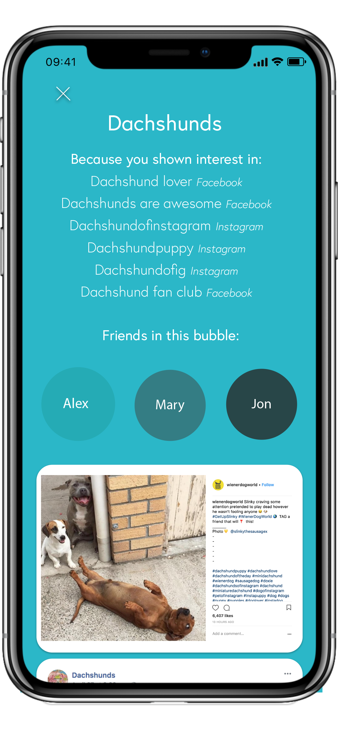 Dachshunds' bubble