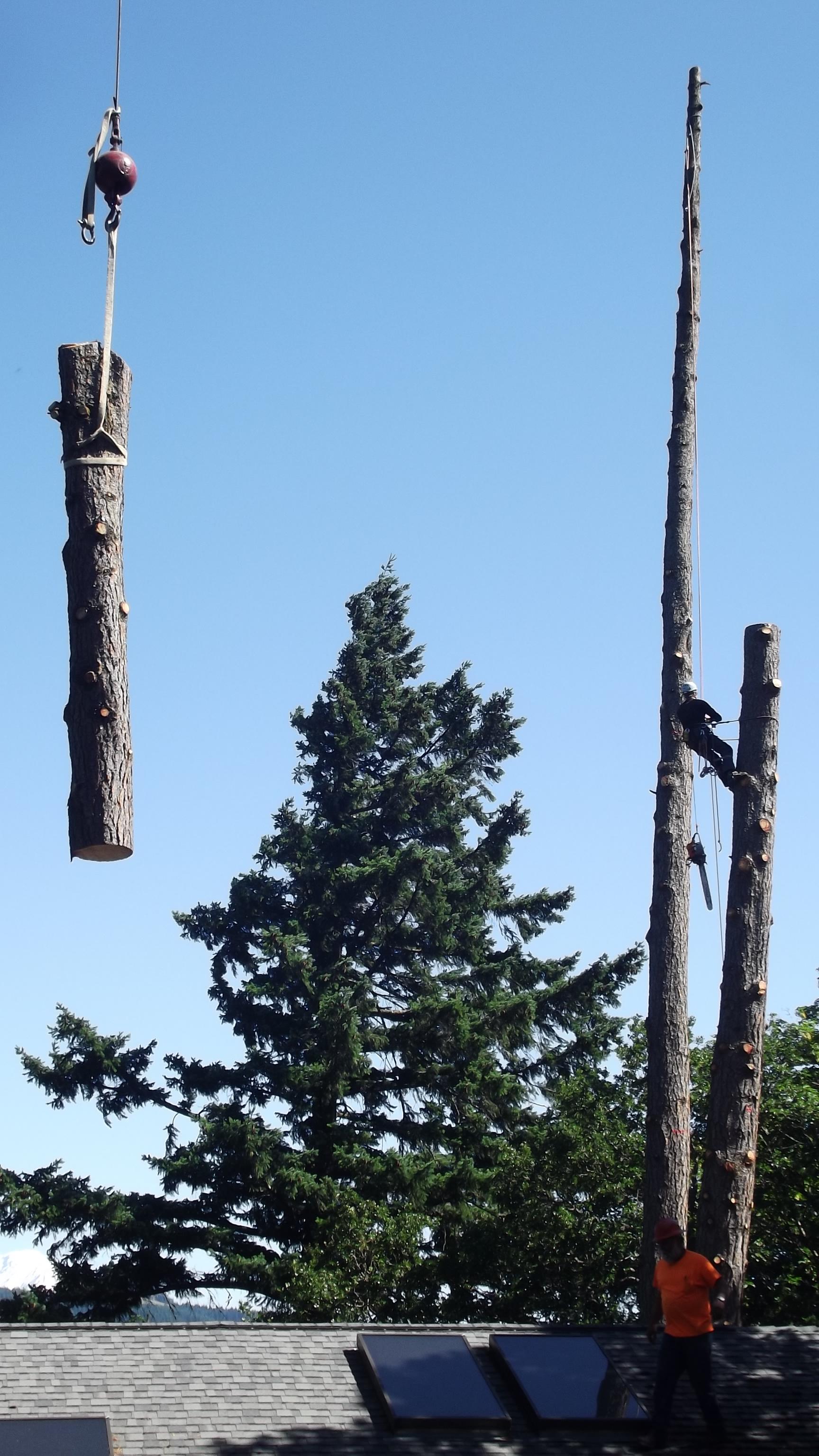 Beetle-Killed Pine Removal Using Crane