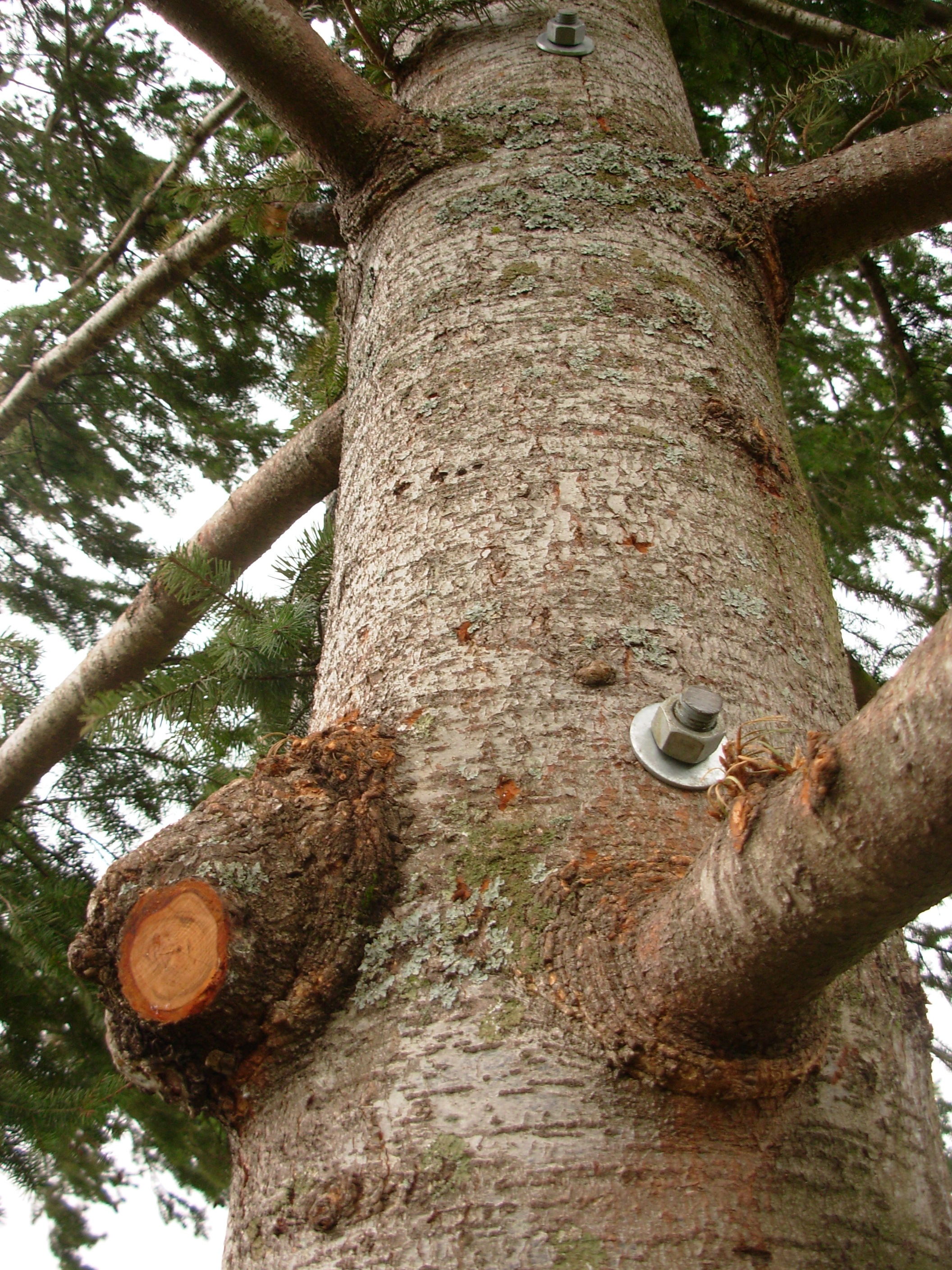 gorge-tree-services-cable-bracing-safety-bolts.jpg