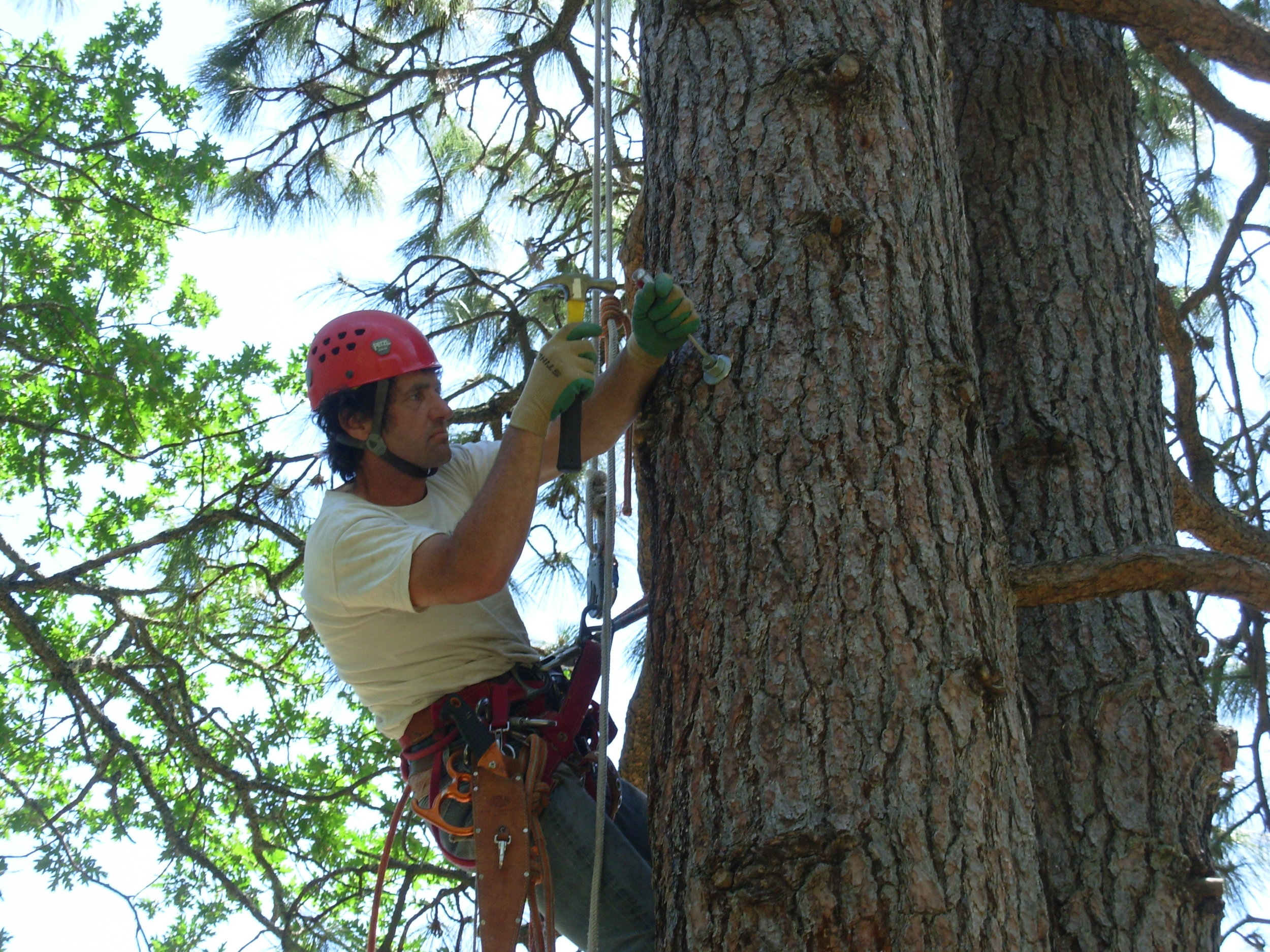 gorge-tree-services-cable-bracing-safety-bolts-harness-installation.jpg