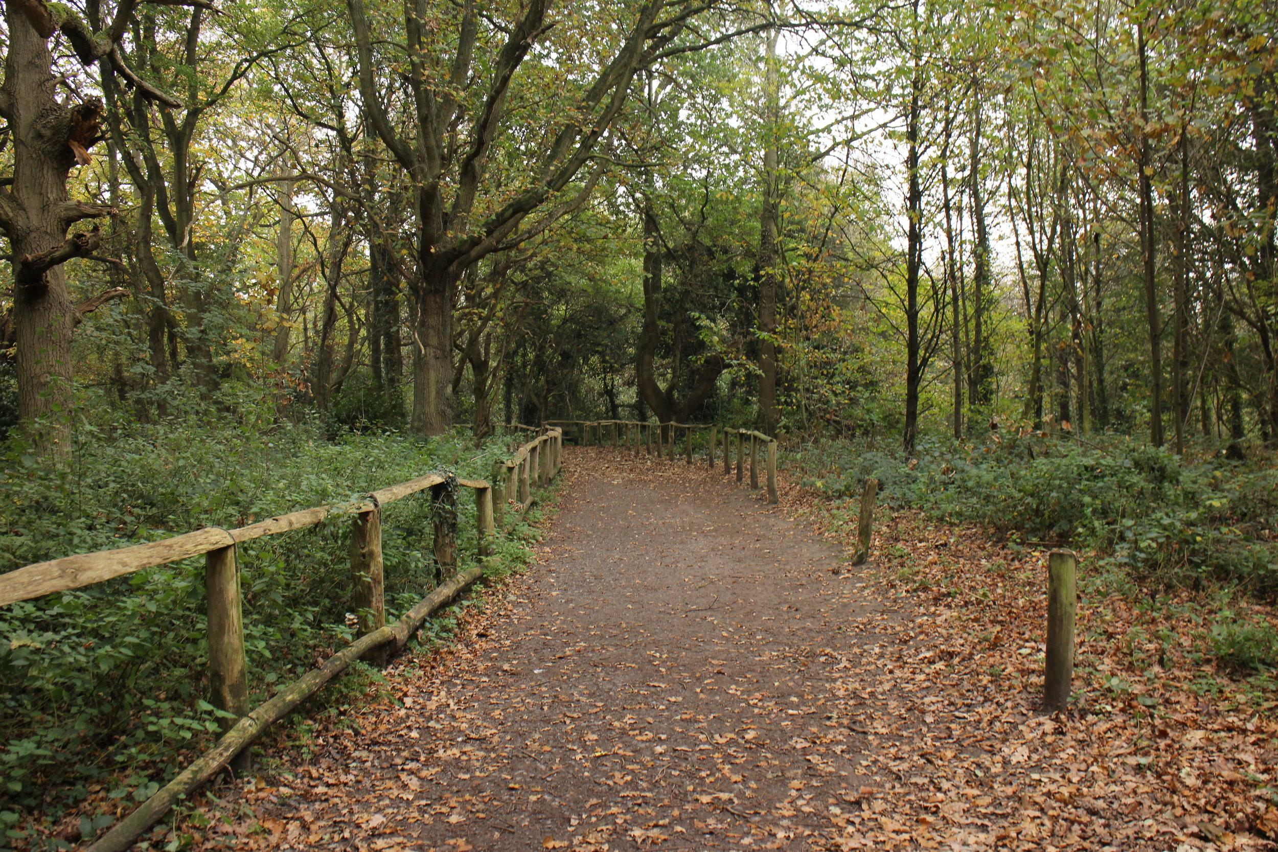 The Acorn Trail