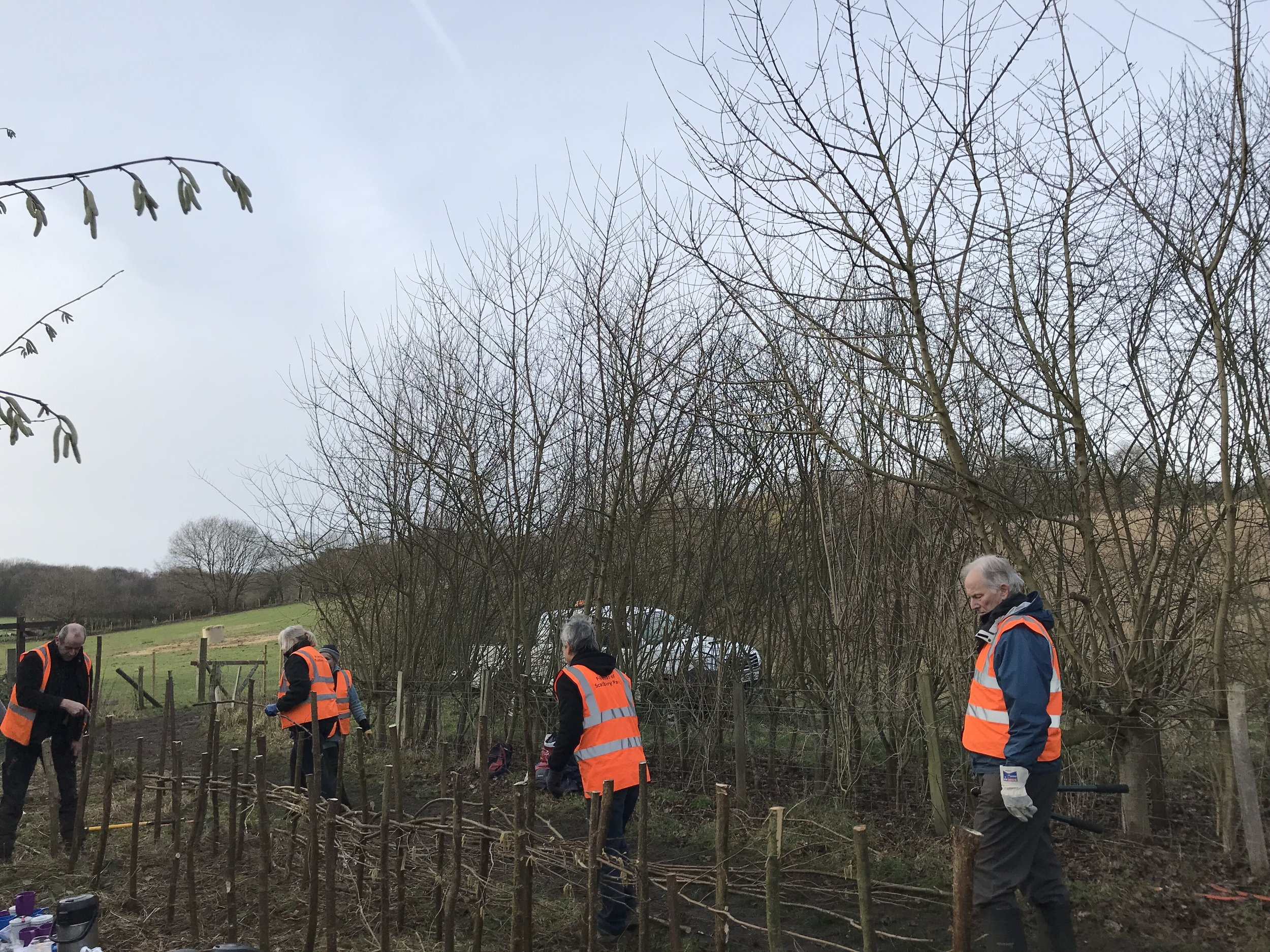 Dead Hedge Laying - With FOSP