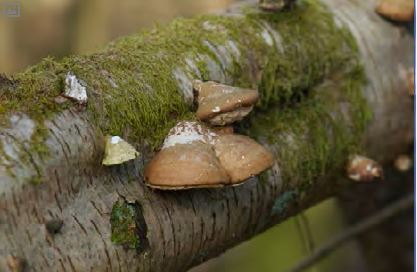 fungus_acorn_05.JPG