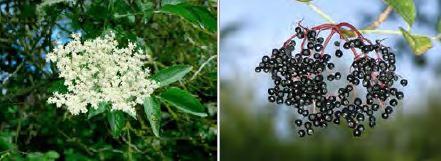 berries_acorn_20.JPG