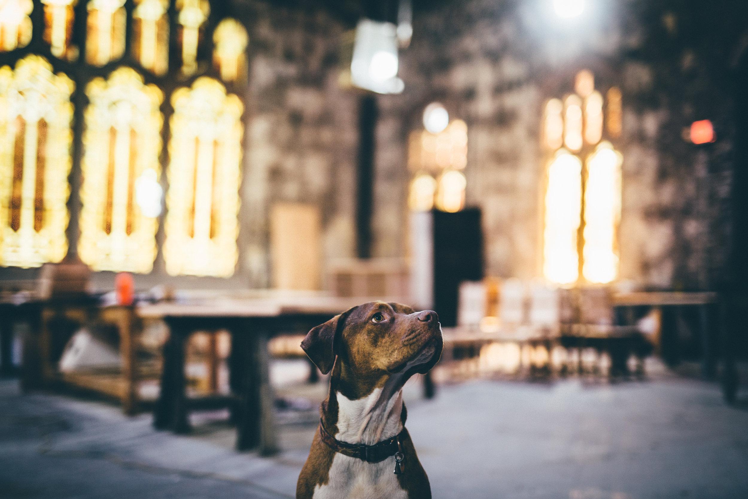 Pete the Shop Dog - 01.jpg