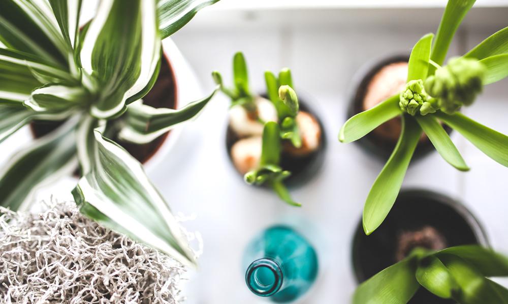 3-plants.jpg