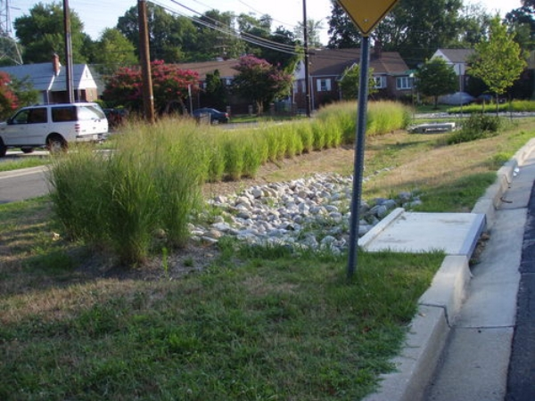 Photo by  Anacostia Watershed Society .