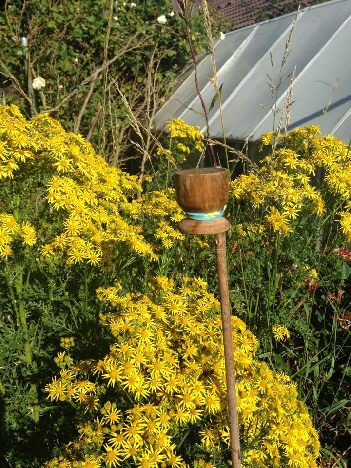 Bee in our garden2.jpg