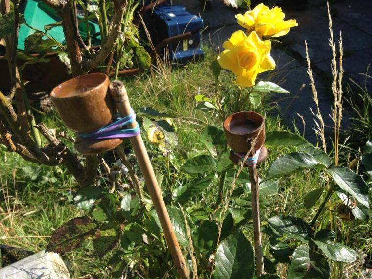 Bee in our garden3.jpg