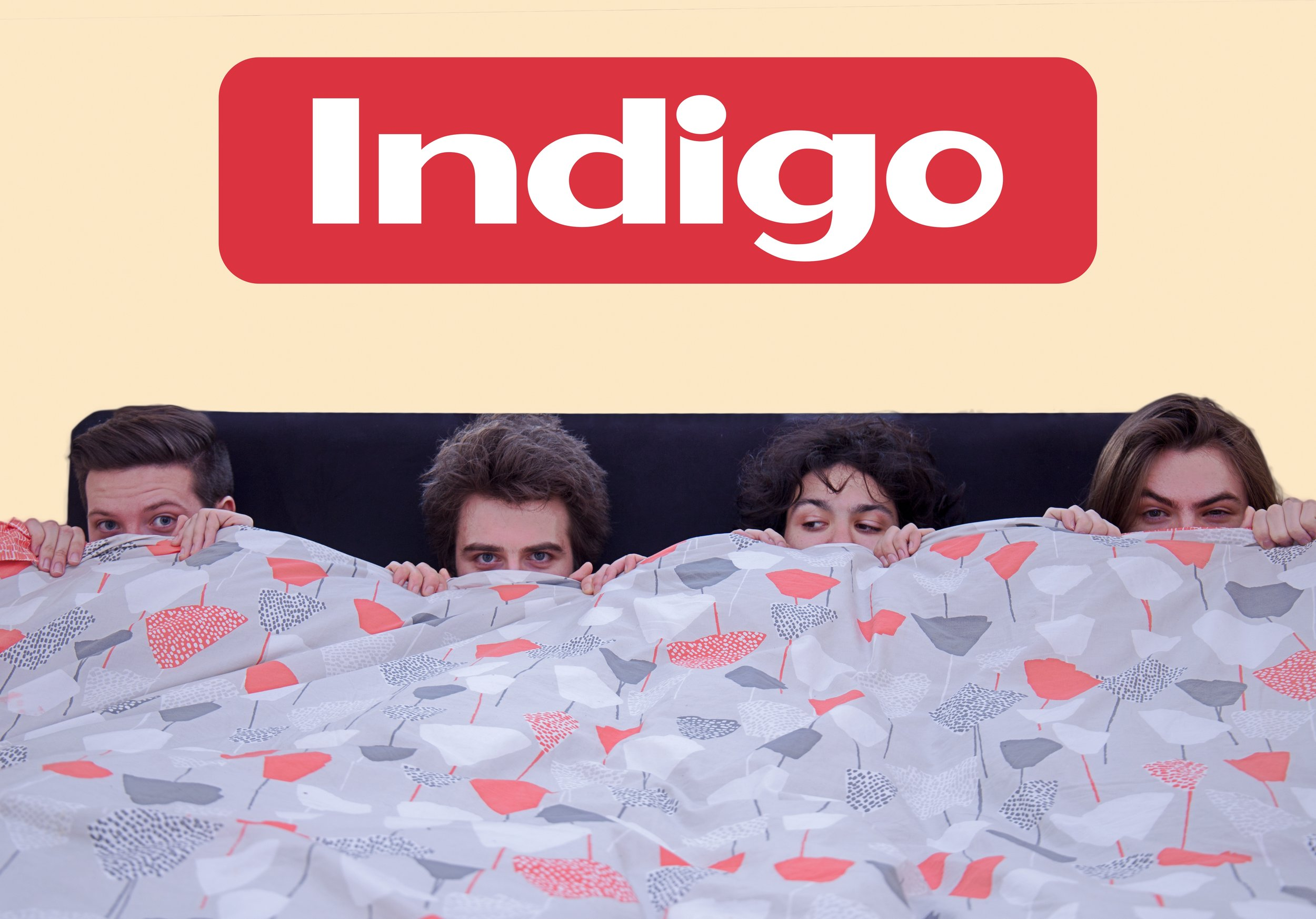 Indigo in bed.jpg
