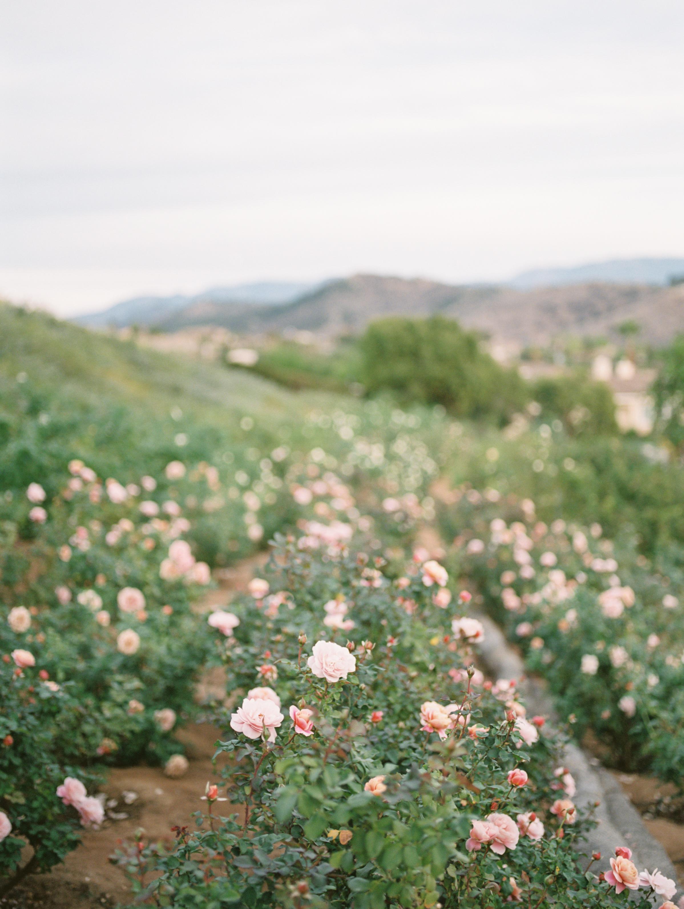 Ella Rose Farm-27.jpg