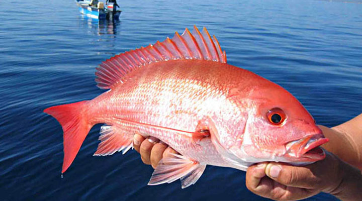 Snapper - Who doesn´t love snapper?