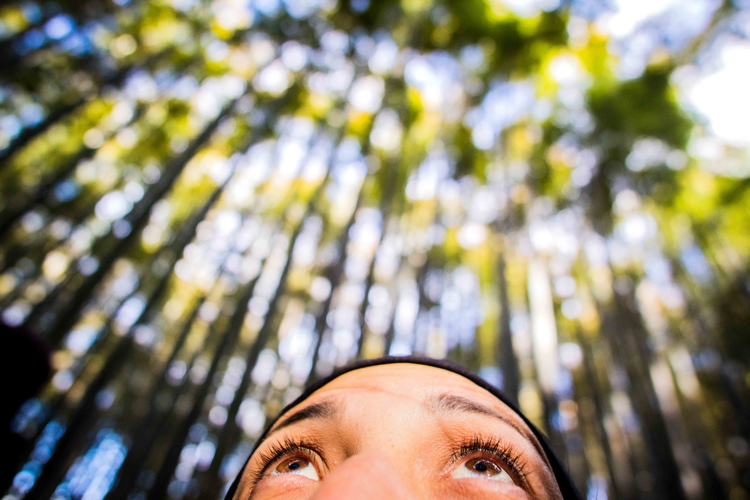 Looking up at the bamboo in Kyoto.