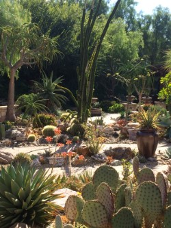 agave and aloe type landscapes.jpg