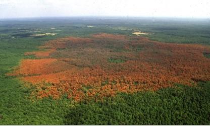 Bark Beetles damage our Forests