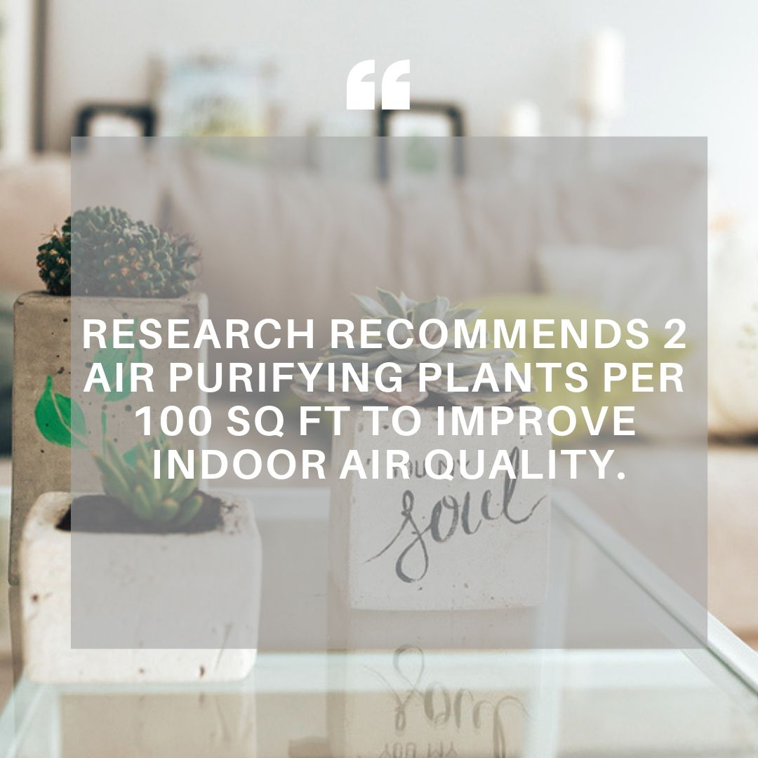 Indoor Air Plants.jpg