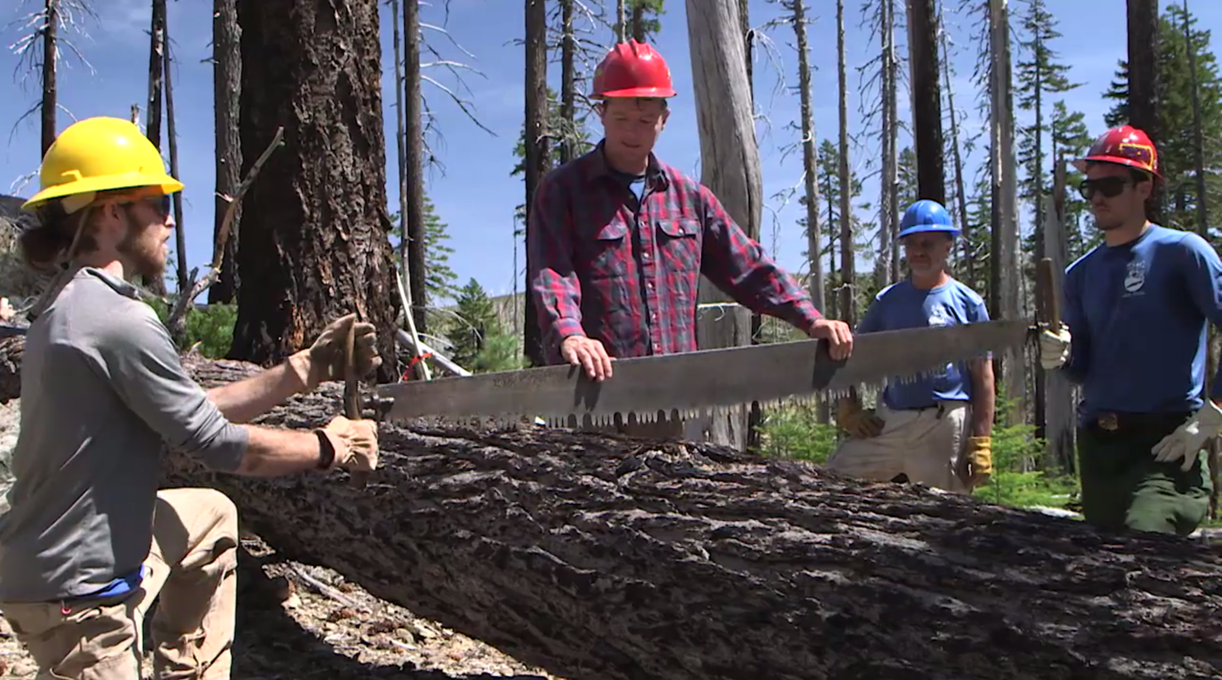 Aaron Babcock teaches volunteers how to use an old-fashioned crosscut saw.