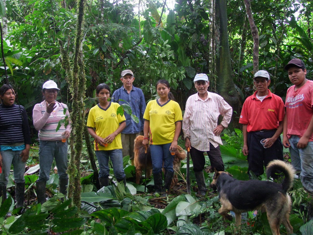The Tribe - Tsatsayaku is made up of 140 Kichwa and mestizo families from 13 different communities, and its mission is to produce and conserve ancestral cacao (Arriba Nacional / Fino de Aroma) that provides a fair price for its members. The cacao itself is grown in the traditional Kichwa farming method 'Chakra', which has a conscientious respect for the natural environment. The organic approach seeks to preserve biodiversity and natural resources.
