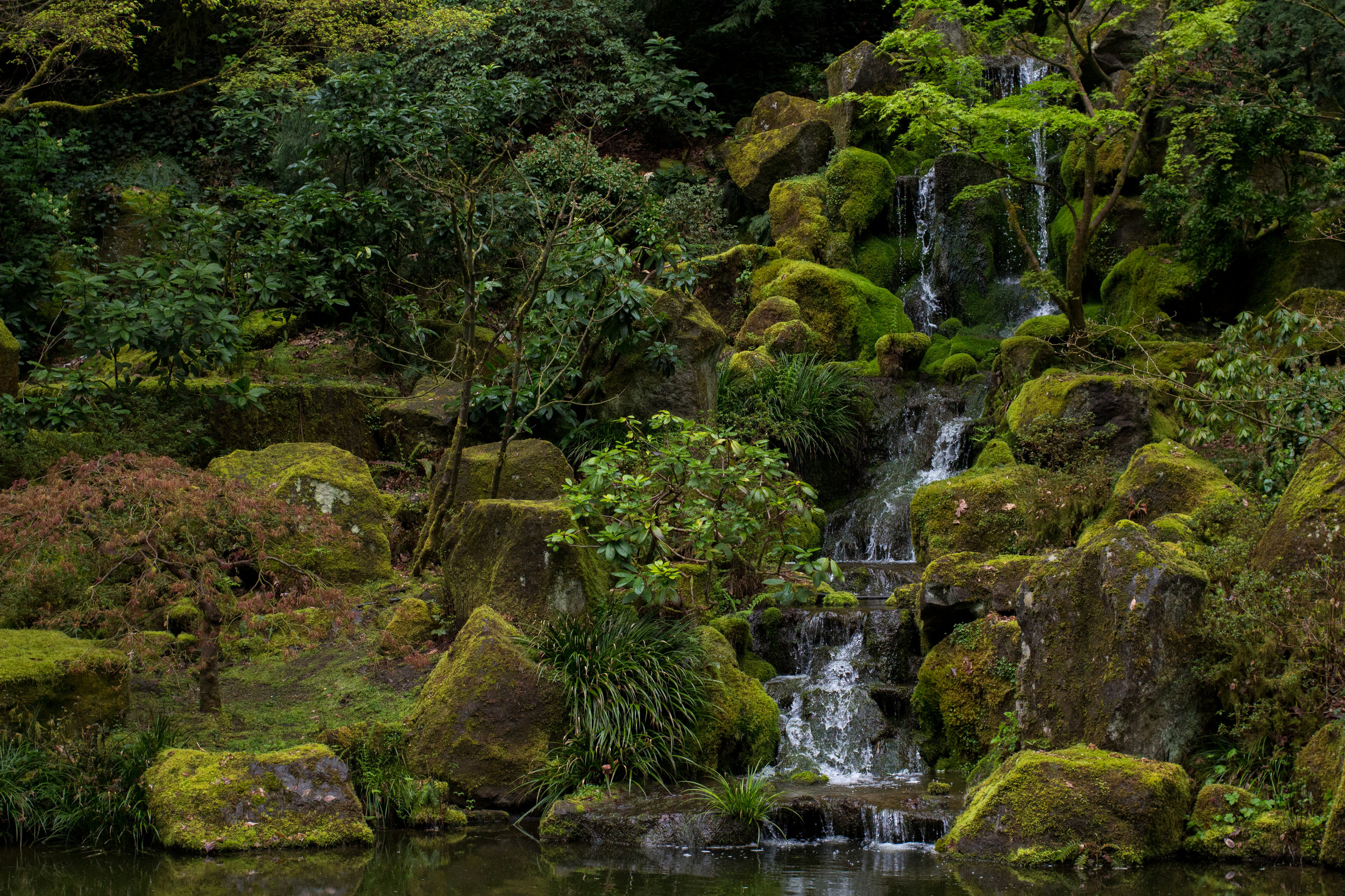 MLESamsara_portland_botanicalgarden_meditation
