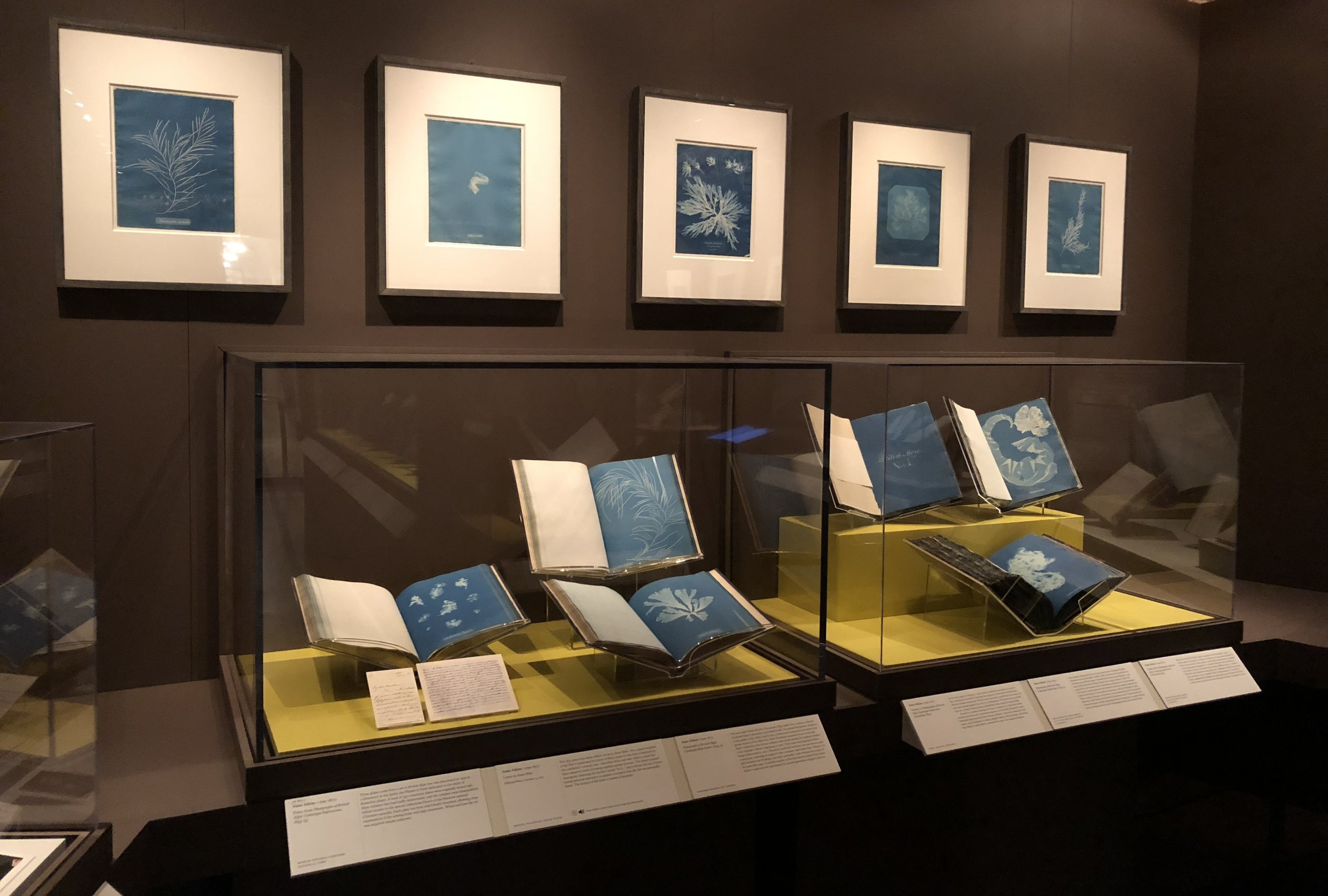 Installation View,  Blueprints: The Pioneering Photgraphs of Anna Atkins