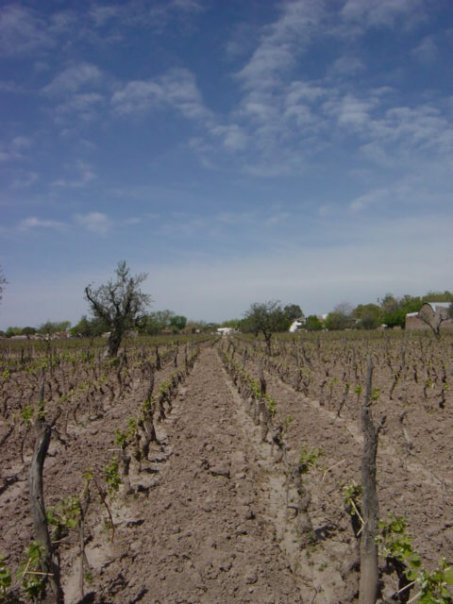 mendoza-1st-winery.jpg