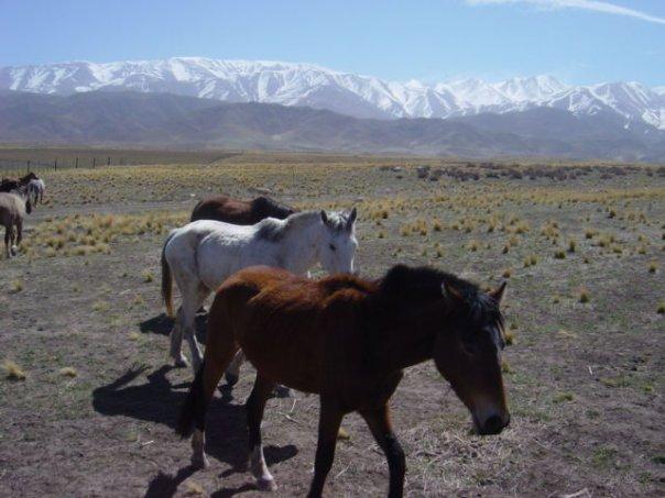mendoza-wild-horses.jpg