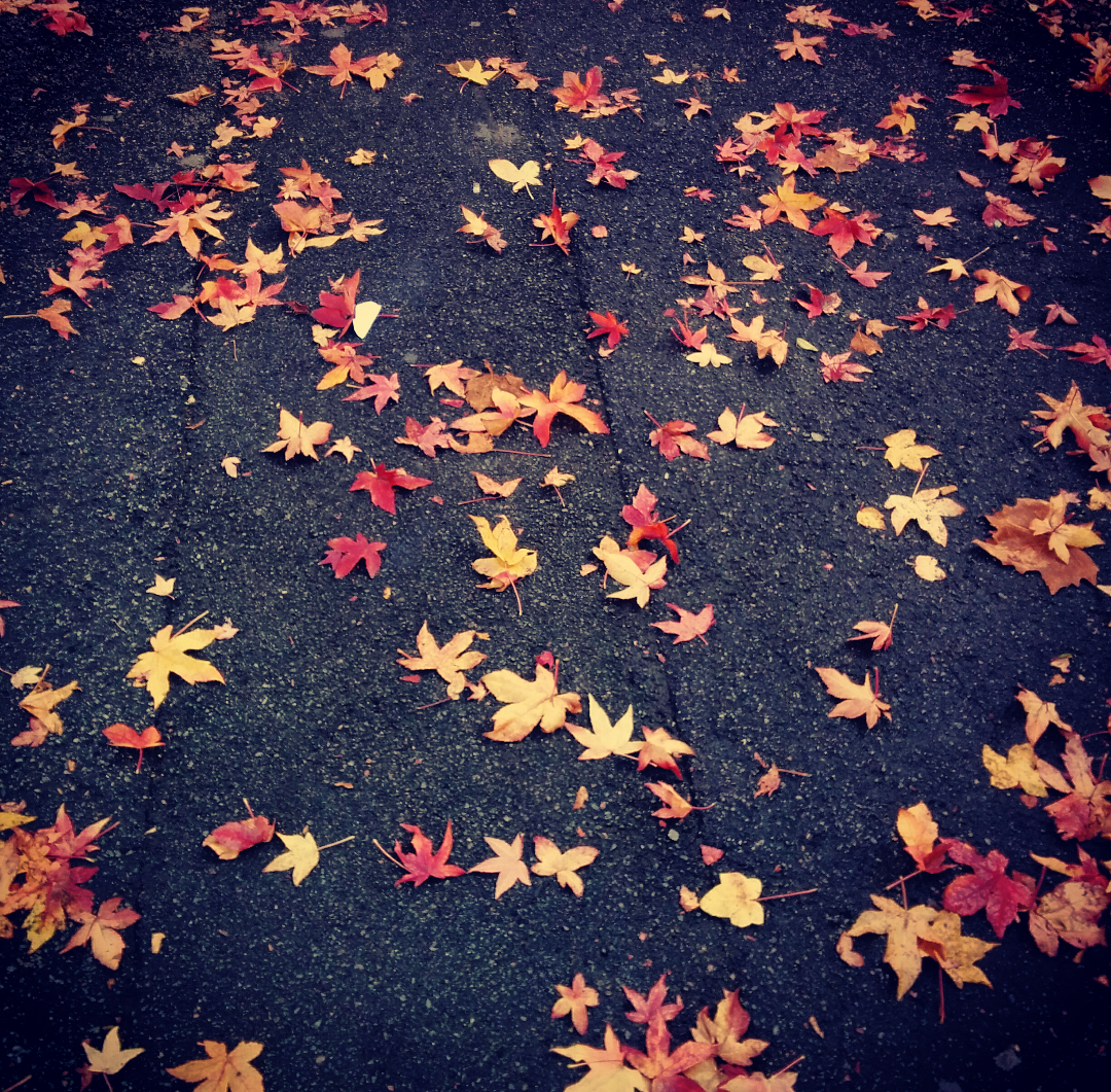 leaves on the street.png