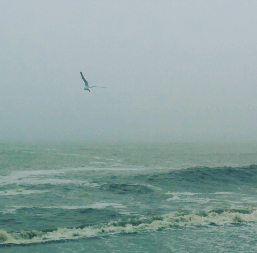 seagull flying by the sea and fog.png