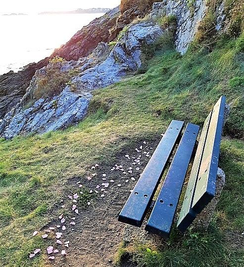 bench+rose+petals+sunset.jpg