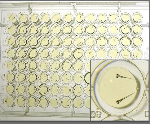 screen-hair-cells.png