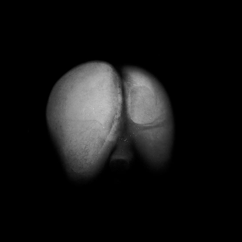 butt9.jpg