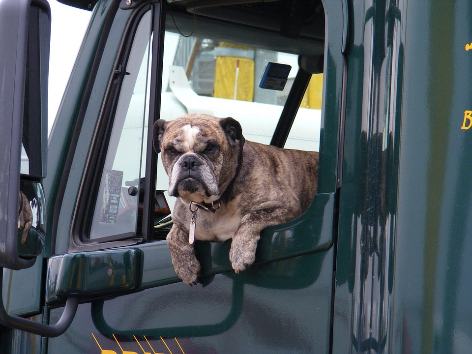 Don't let a violation put you in the dog house! -