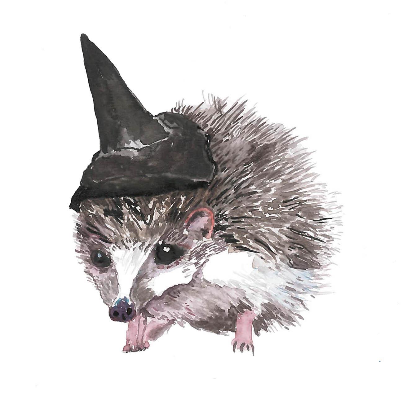 Square-Hedgehog-Cover.jpg