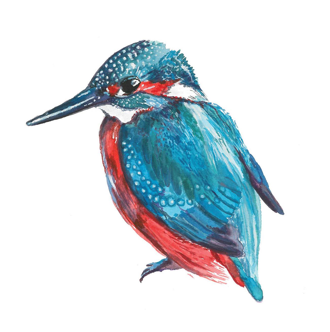 Kingfisher-Louise-Naughton.jpg