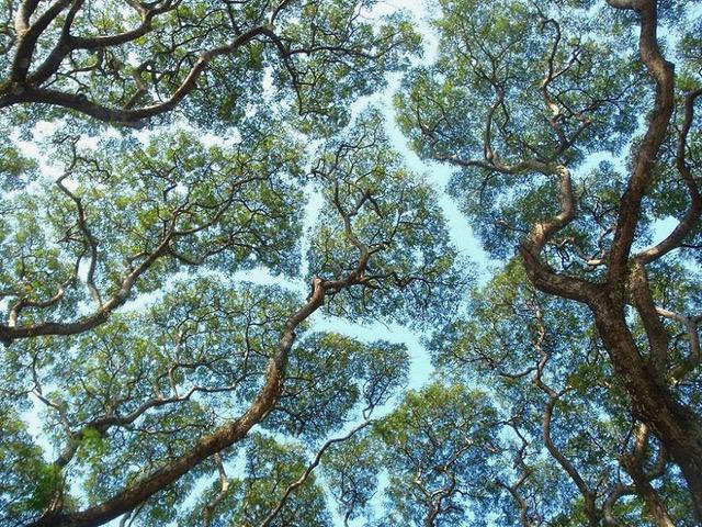 trees touching.jpg