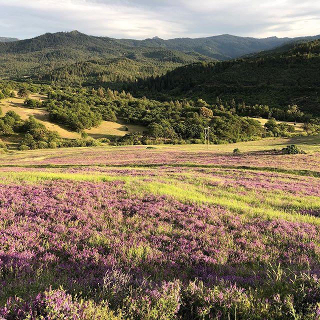 All those purple hillsides! 😍