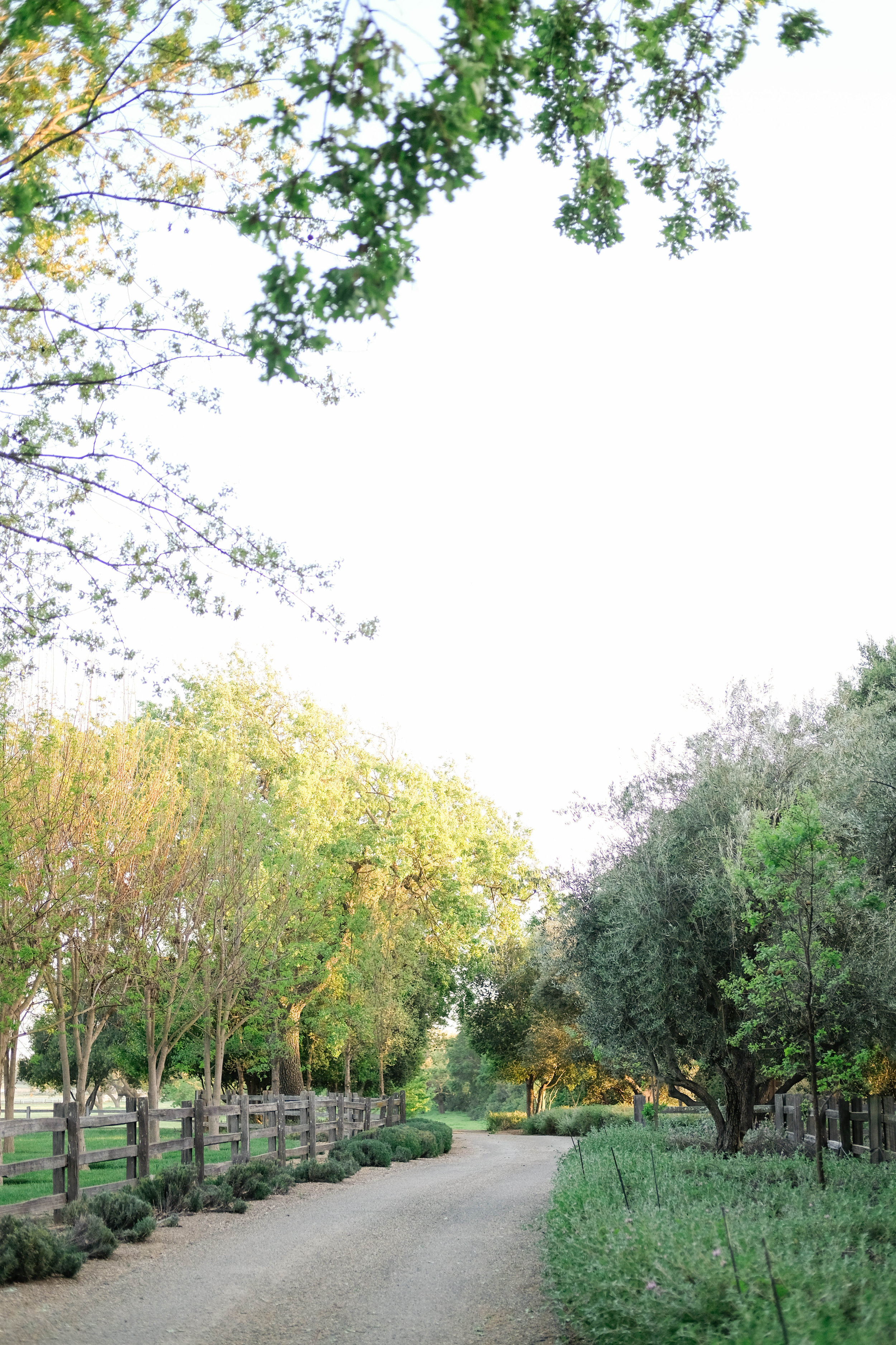 santa ynez wedding -by maher haroun20.jpg